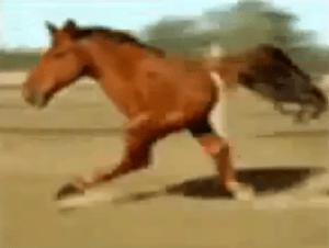 Funny Two Legged Horse